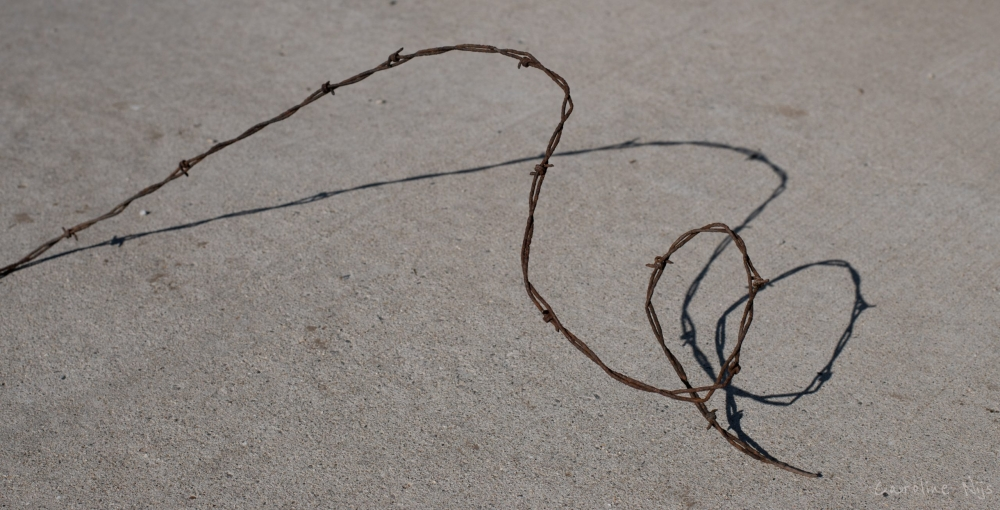 Photograph of barbed wire