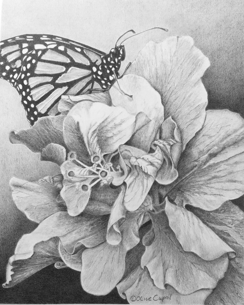 Pencil drawing of butterfly on flower
